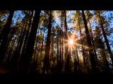 Индейская этническая музыка Флейта, плюс Nature 2011)