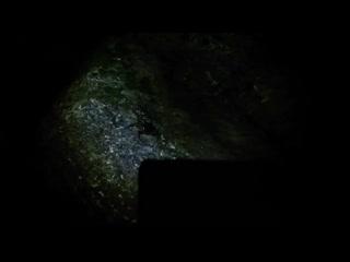 Крабы в Анапе на камнях
