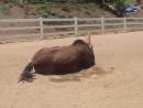 Пукающая лошадь