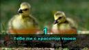 Виктор Салтыков - Ты замуж за него не выходи, караоке DJSerj