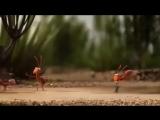 Познавательные мультфильм прикольный мультик про дружбу Вместе мы сила прикольное видео 2013