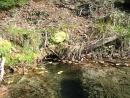 Липовое озеро, бобровая хатка 2