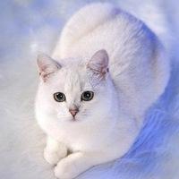 Валентина Мелех, 10 февраля , Абакан, id63714995