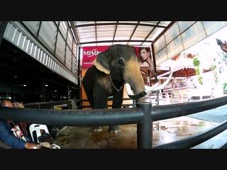 Нонг Нуч тропический сад, катание на слонах Паттайя Тайланд декабрь 2018г