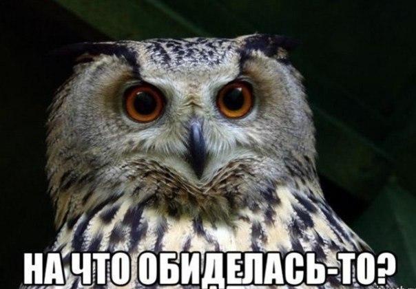 http://cs543103.vk.me/v543103567/1bee6/asG570cCX-w.jpg