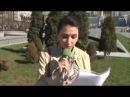 Ukraynada Azərbaycan seirləri