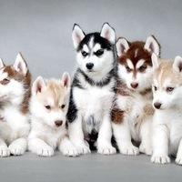 смотреть все породы собак фото