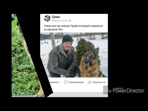 27 08 2018 умер знаменитый пёс Граф из сериала Пёс