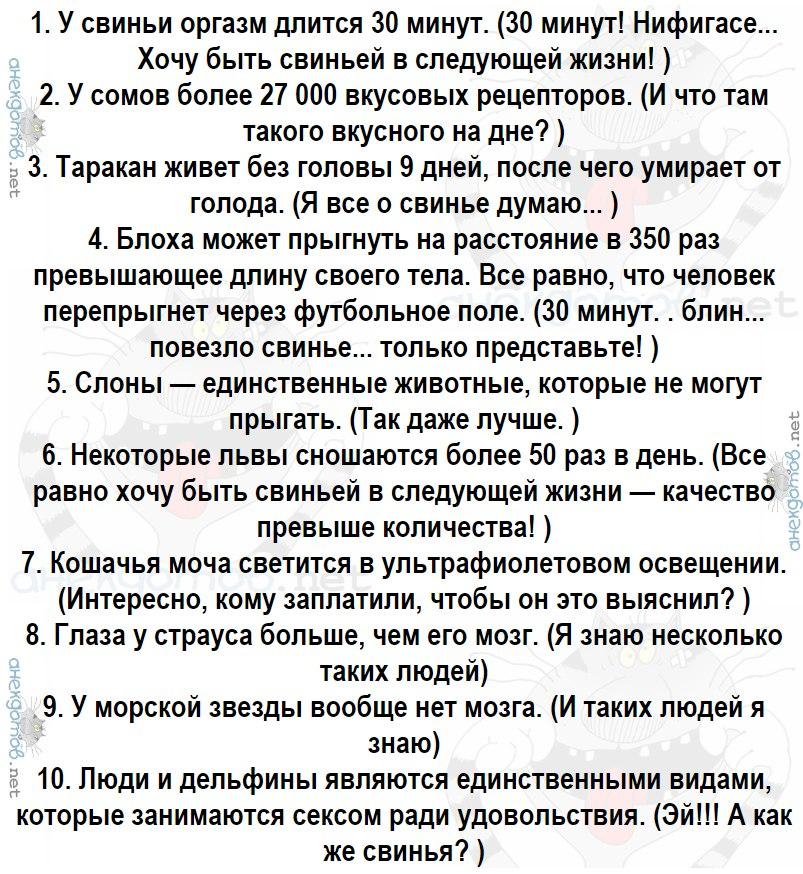 Анекдот Про Люльку