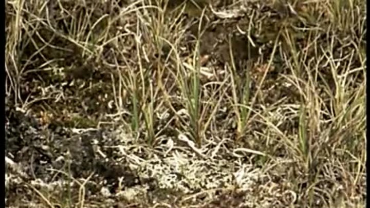 BBC Жизнь птиц 08 Потребности яйца Документальный 1998