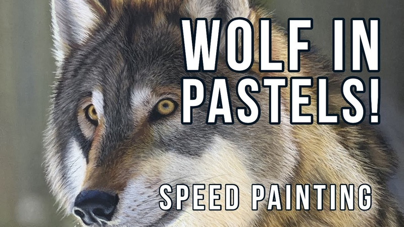 Drawing a Wolf in Pastels - Speed Painting Wildlife Art Demo