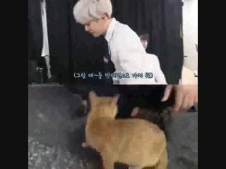 kitten wins