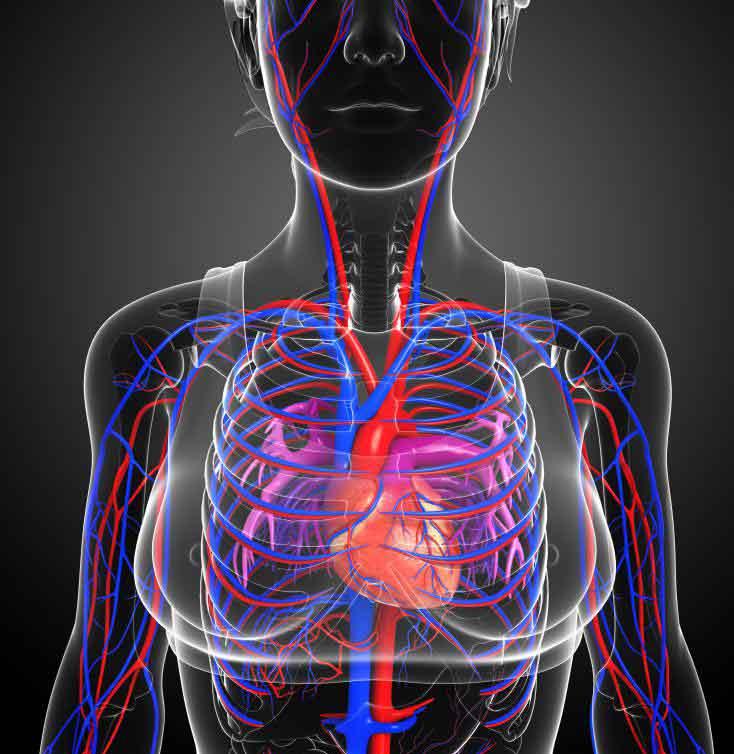 Дигоксин замедляет сердечный ритм и увеличивает интенсивность сокращений