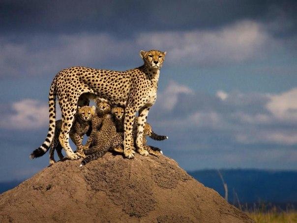 Мама — она и в Африке мама ❤ 7 прекрасных фото недели: ↪