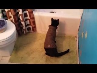 Подборка неуклюжих котов