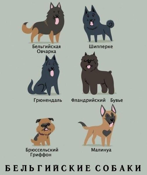 Фото №386562744 со страницы Натальи Ветлугаевой