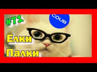 Подборка приколов про котов, Лучшие в COUB #71! Кучерявый урус мстит! Ёлки-Палки!