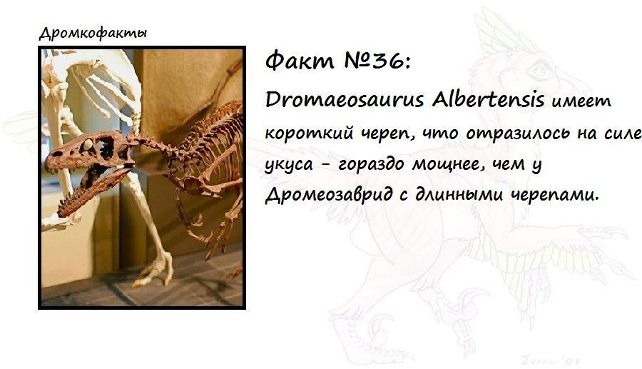 https://pp.vk.me/c619921/v619921874/2066c/nHf-4-rQ0Y0.jpg