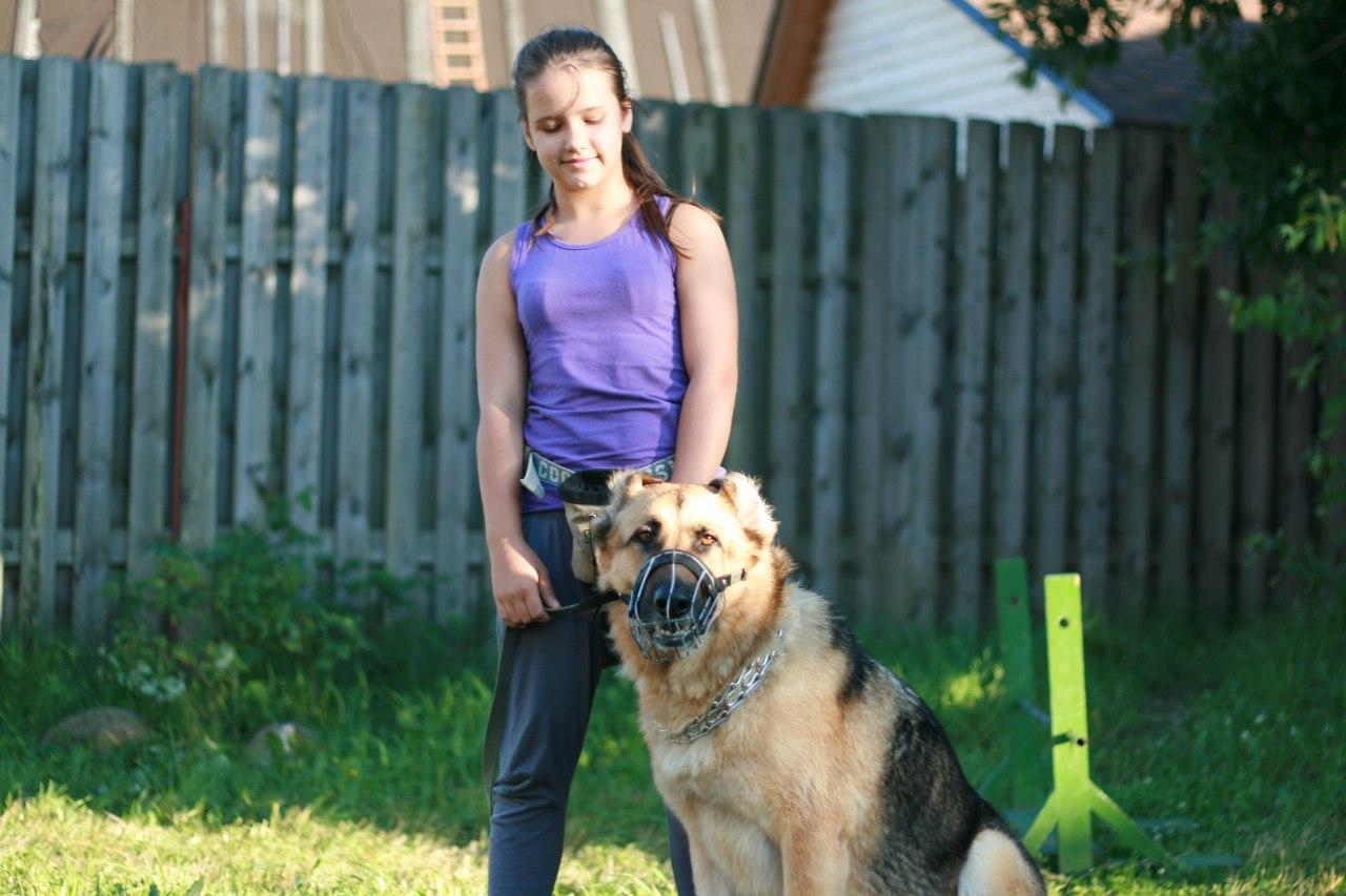 Лагерь выходного дня для дрессировки собак