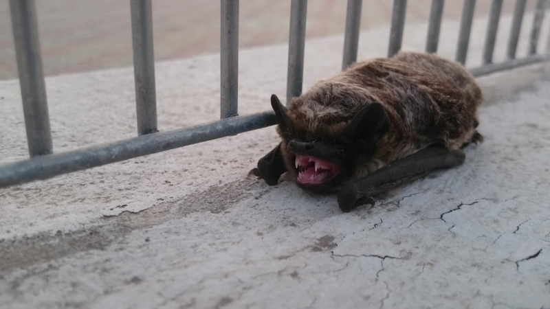 Летучая мышь у стадиона Мордовия Арена
