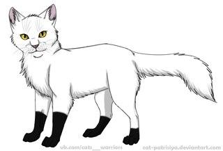 Самый первый кот воитель