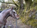 Extreme Horse Riding on Exmoor