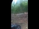Ветхое жилье из Дегтярска свалено в соседнем лесу