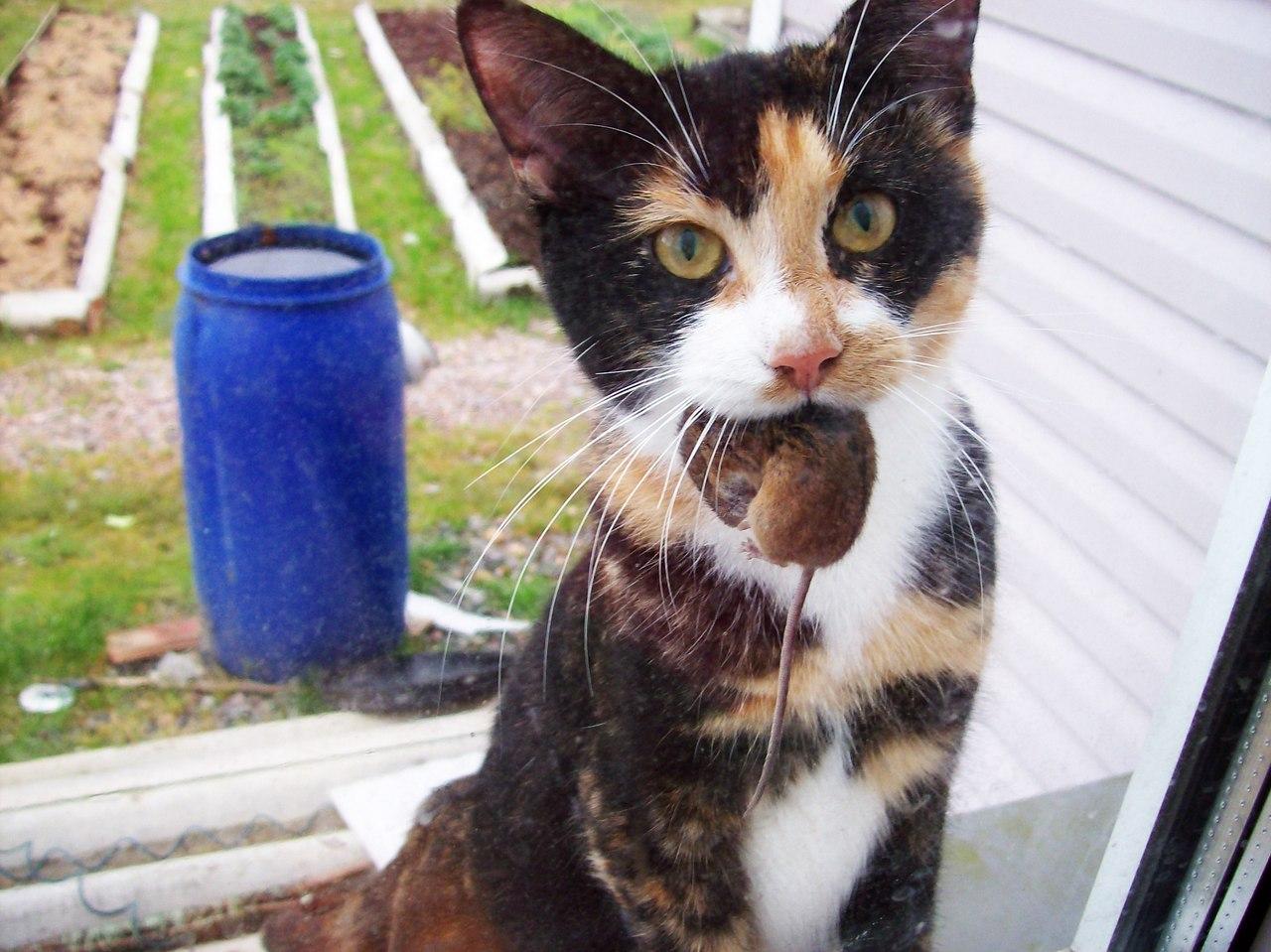почему кошки мяукают