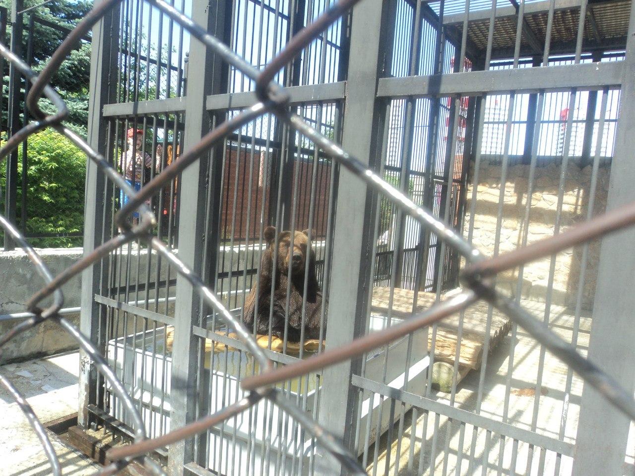 Зоопарк для детей