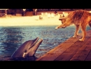 «Зевс и Роксана». «Zeus and Roxanne».1997.DOLPHIN & DOG SPECIAL FRIENDSHIP - Vangelis  Song Of The Seas.