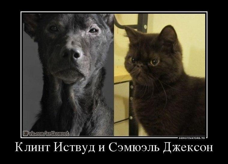 Чему выдумал скачать бесплатно на телефон картинки кошек и собак сиамских котят двигались склону