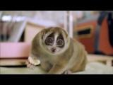 Лори - самые милые животные в мире :3