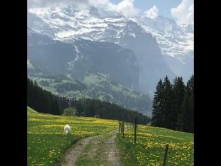 Прогулка в Швейцарии