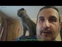Лучший маленький котенок Скоттиш фолд.Вы никогда не видели лучшего котенка!🔴 😻