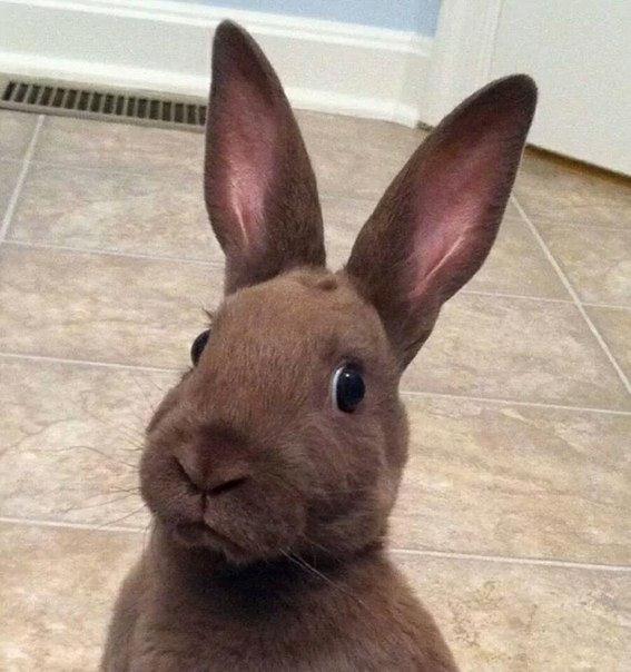 - Кто-то сказал морковка!?, прикольные и смешные - приколы