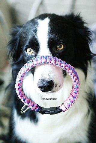 Ошейники своими руками для собак