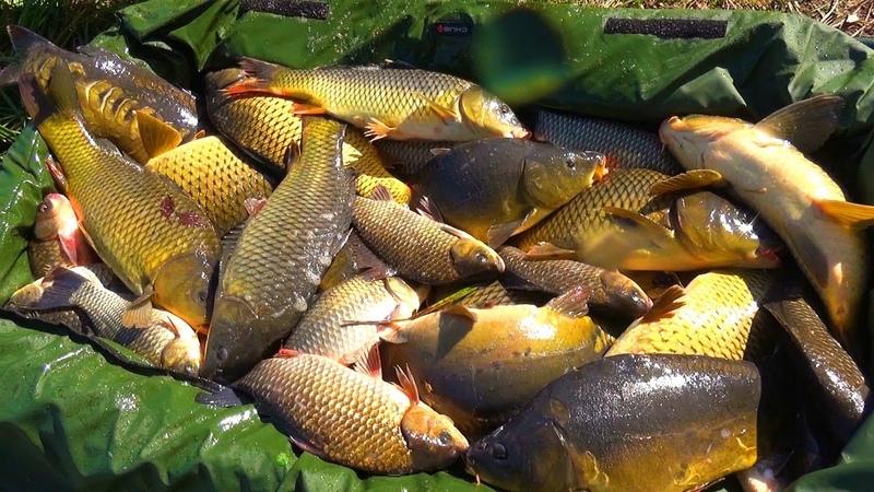 Набомбили мешок карпа! Рецепт рыбацкого борща от Серёги! Рыбалка с ночевкой на четыре дня! Часть ТРИ