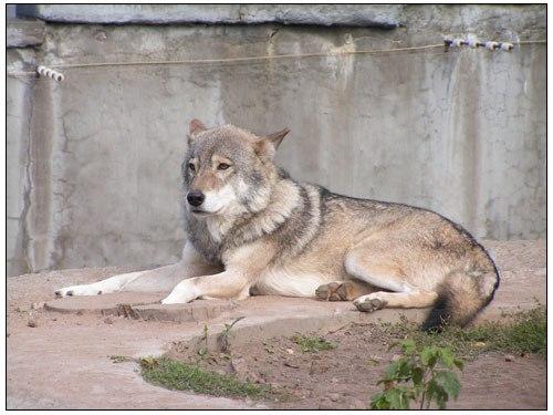 степной волк скачать fb2