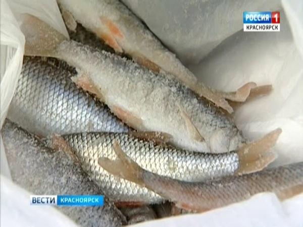 В Красноярском крае смягчили запрет на рыбалку