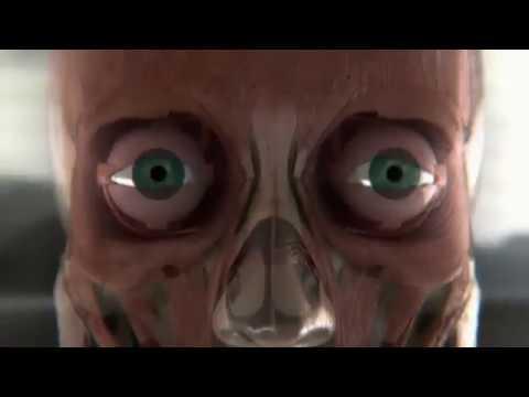 Тело человека Грани возможного - Зрение