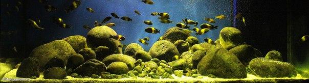 Конкурс дизайна биотопных аквариумов JBL 2014 NFRURkf-av8