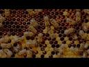 Expo 2020 Beehive