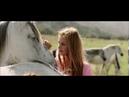 Ed Sheeran - Perfect z filmu Ostwind 3
