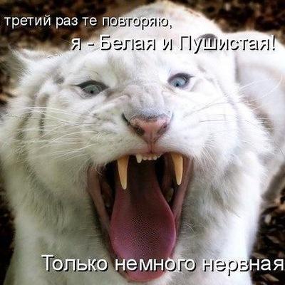 Катюня Палади, 13 сентября , Тверь, id161394162