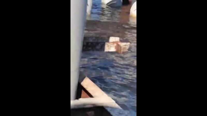 Горбатый кит вблизи Высоцка 19 05 2018