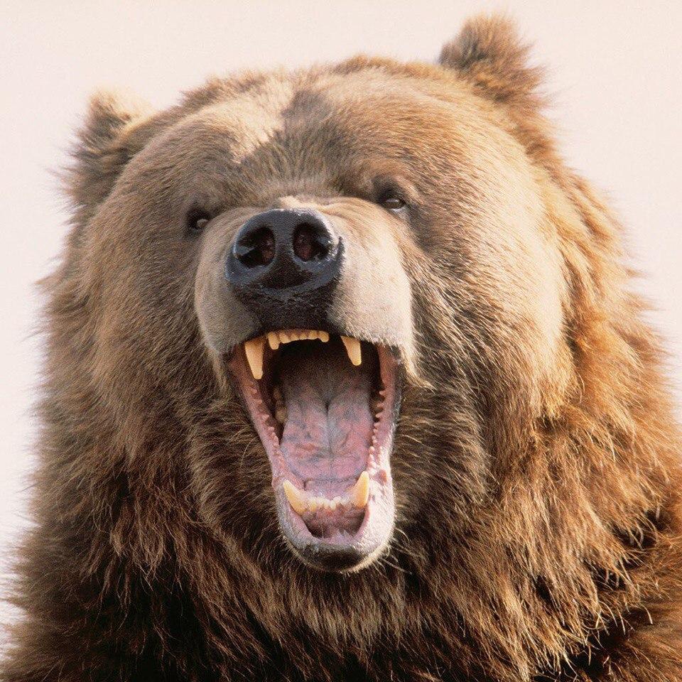 Как охотника спасали.  Медведь едва не растерзал охотника  на севере области