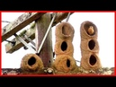 Natural Architecture The Bird's Nest HD Documentary