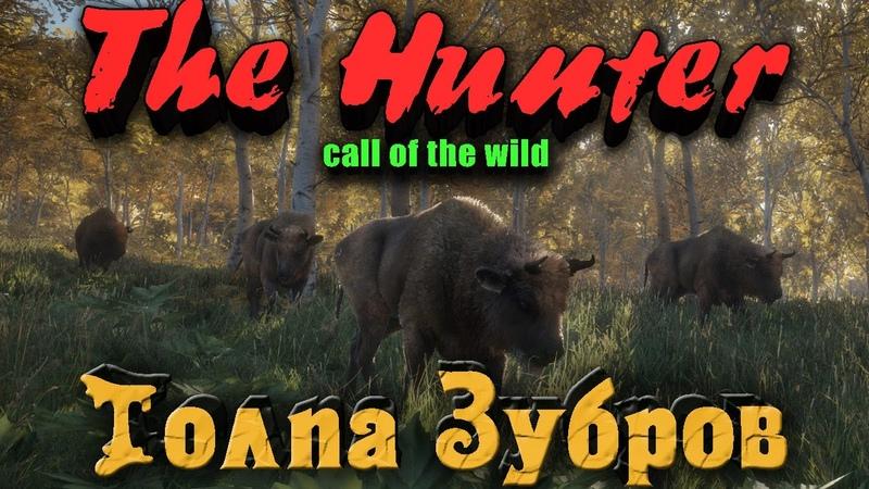 TheHunter Call of the Wild - Стадо зубров и топовая винтовка