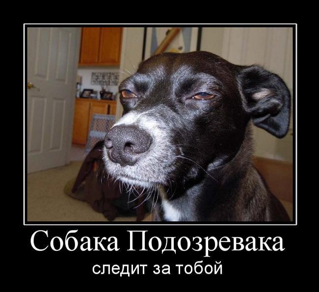 Собака-подозревака 90лвл