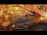 Футаж Осень 1
